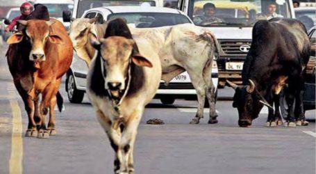 گائے کی سمگلنگ کے الزام میں اب تک 277 افراد گرفتار