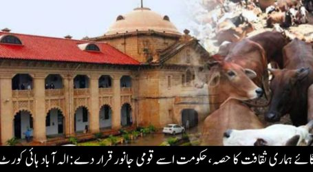 گائے ہماری ثقافت کا حصہ ، حکومت اسے قومی جانور قرار دے : الہ آباد ہائی کورٹ